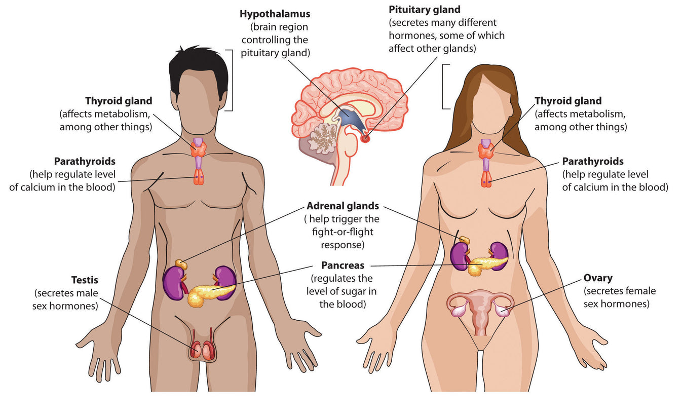 Thyroid, Adrenal & Endocrine