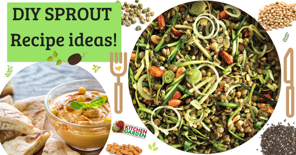How you can add sprouts to healthy meals