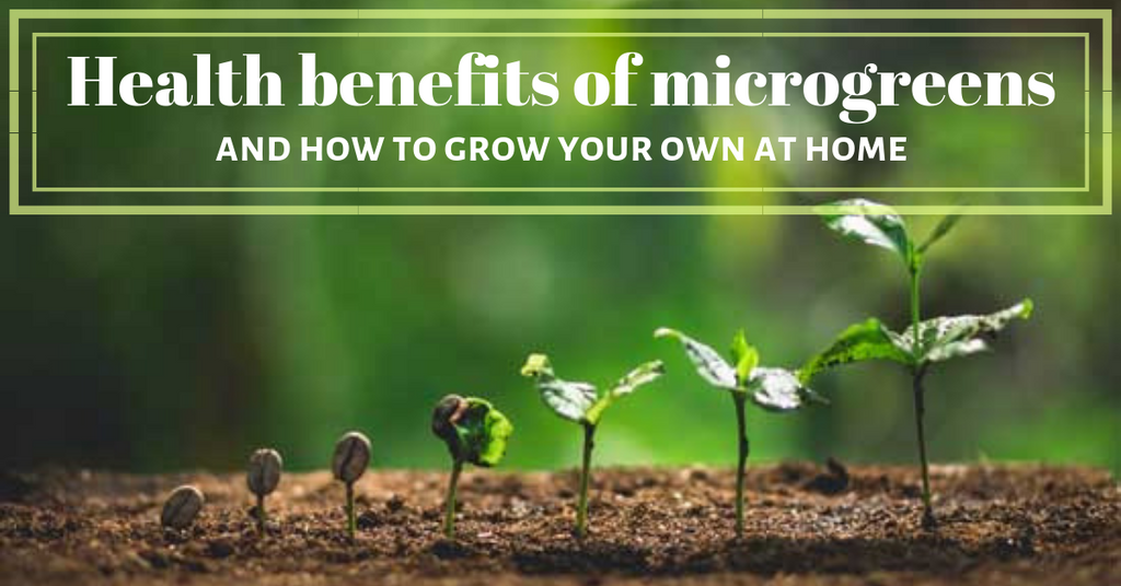 health benefits microgreens and how to grow at home