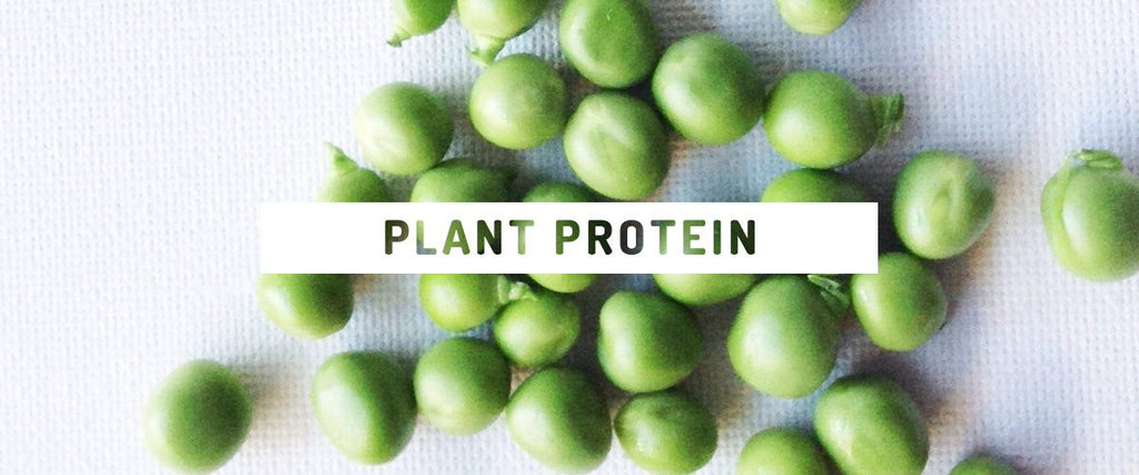 How to get more protein from a plant-based diet!