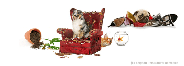 Pet Health Blog: How to help your pet adjust to being home alone