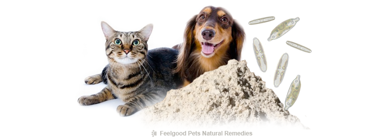 Health benefits of diatomaceous earth for dogs and cats