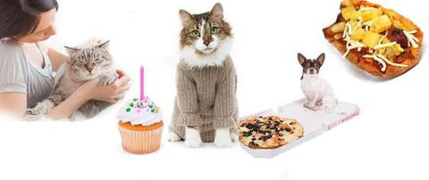 Find out if spoiling your cat or dog is good for them & what you can do