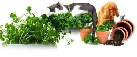 herbs to grow at home for dogs or cats