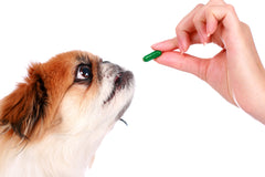 Pet Health Supplements & Vitamins: Dogs & cats