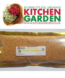 Non-GMO organic Yellow Mustard Seeds for sprouting South Africa