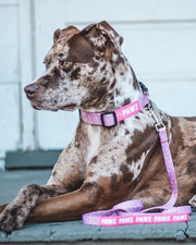 Pawz All Star Dog Collar & Leash Set - Pawz