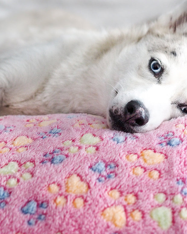 Buy A Blanket For A Shelter Dog - Pawz