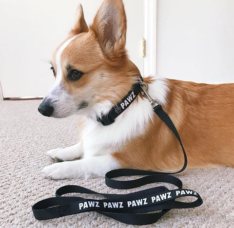Hand Made Black Pawz Leash and Collar Set!