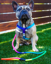 Pawz Rainbow Dog Harness & Matching Rope Leash - Pawz