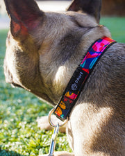 Pawz Kaleidoscope Dog Collar & Leash Set - Pawz