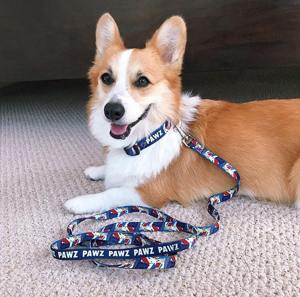 Retro Collar and Leash Set! + lanyard