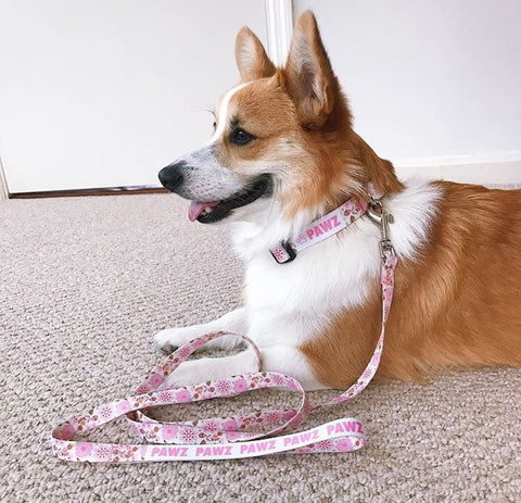 Pink Floral Leash and Collar Set