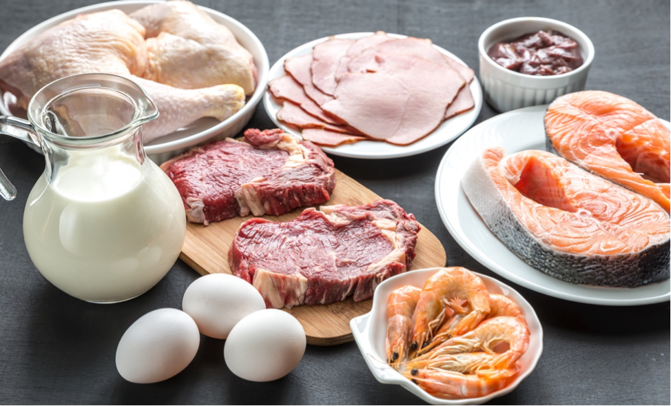 best sources of protein to eat healthy