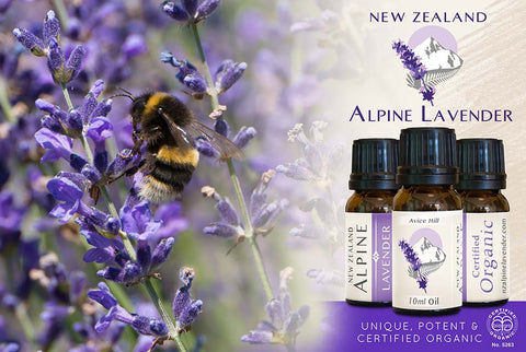 Avice Hill-Certified Organic Lavender pure essential