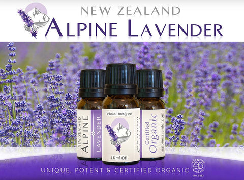 Alpine Gold-Certified Organic Lavender pure essential