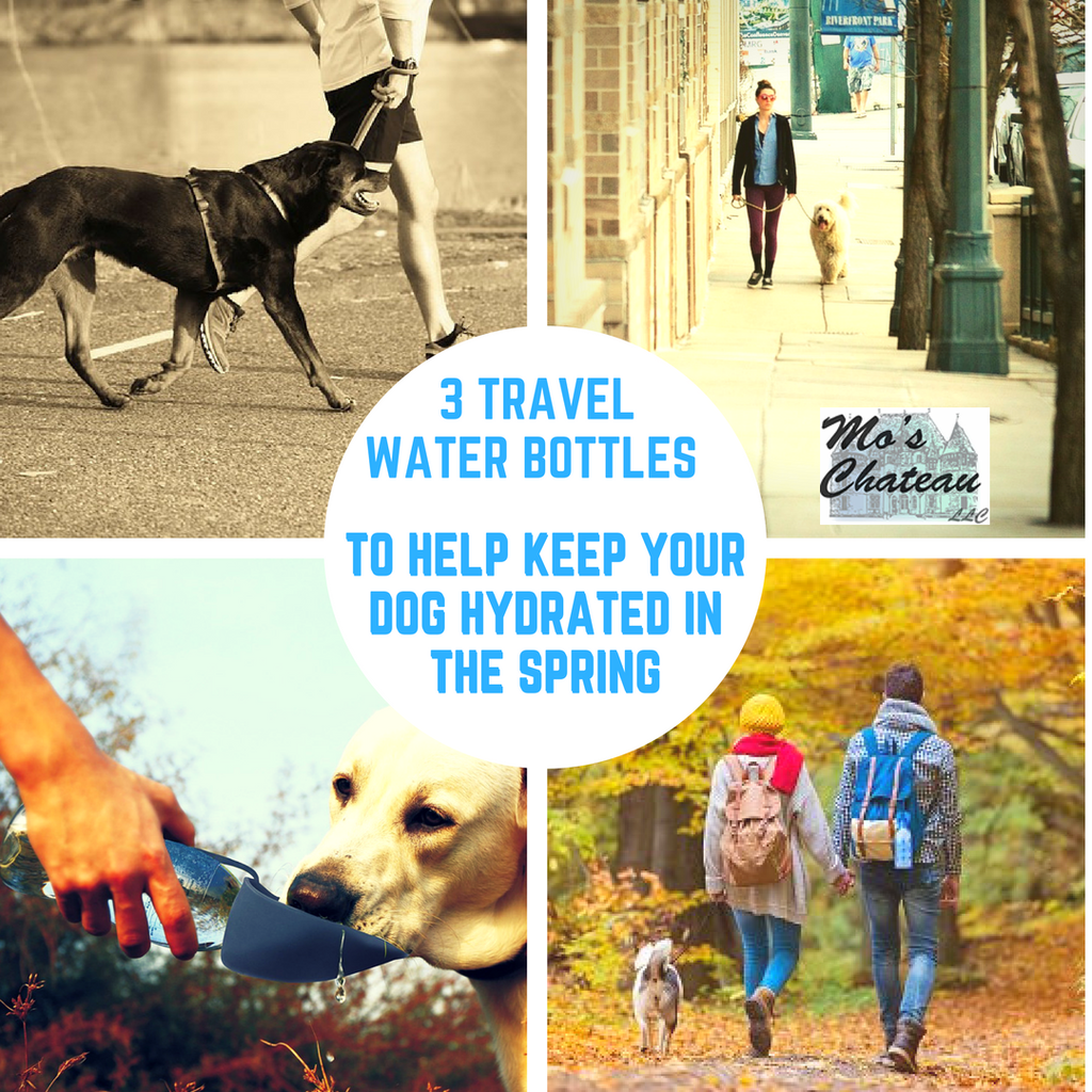 3 Travel Water Bottles to Help Keep Your Dog Hydrated in the Spring