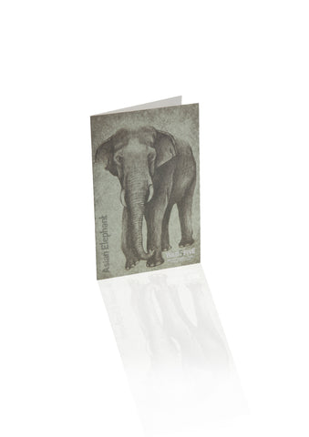Wild 5 Five - Greeting Cards (Set of 6)