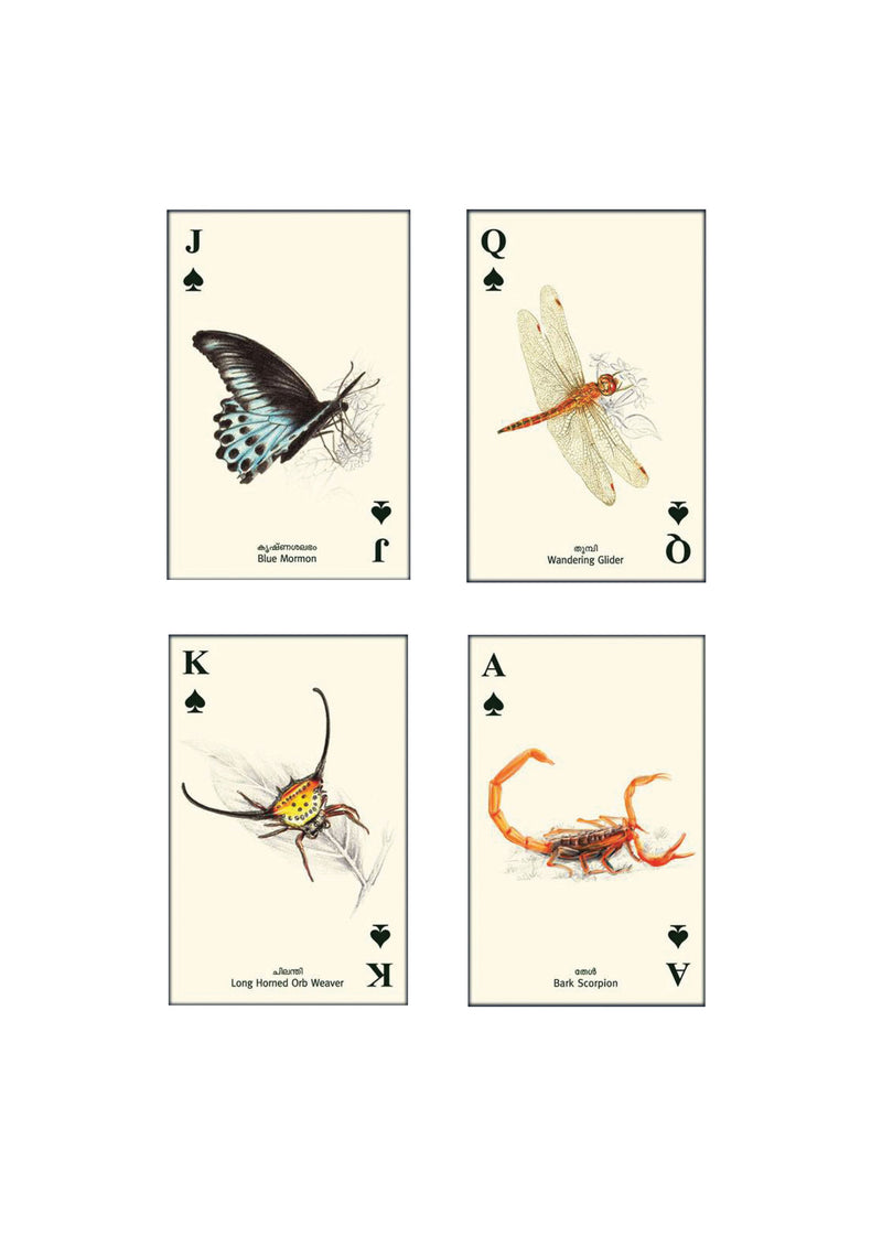Wild 5 Five - Playing Cards