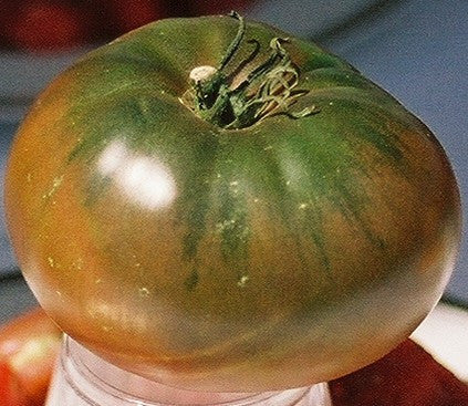 Tomatoes, Black Krim (Organic) (Heirloom)