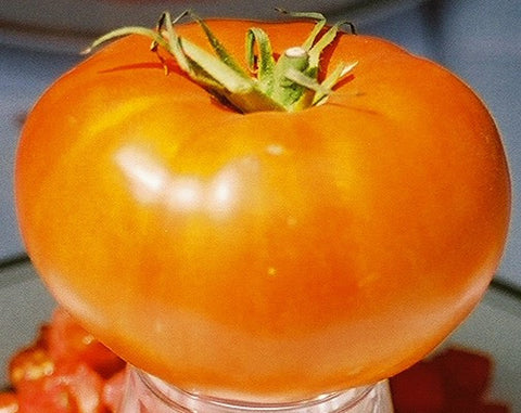 Tomatoes, Brandywine, (Organic) (Heirloom)