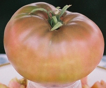 Tomatoes, Cherokee Purple (Organic) (Heirloom)