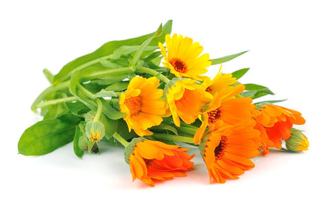 Flowers, Calendula, Pacific Beauty Mixed