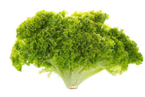 Lettuces, Nevada  (Pellets MI) (Green Batavia)