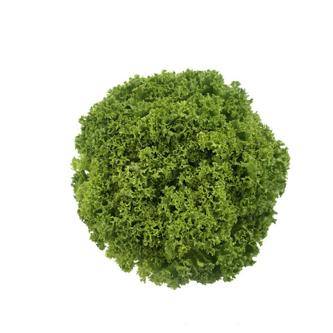 Lettuces, Granite (Lollo Bionda Type) (Hydroponics/Greenhouse)