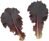 Lettuces, Showdown (MI, Pellets) (Red Leaf/Romaine)