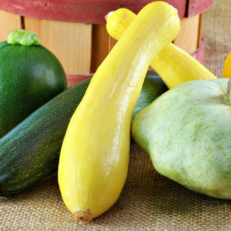 Squash, Summer, Golden Zucchini