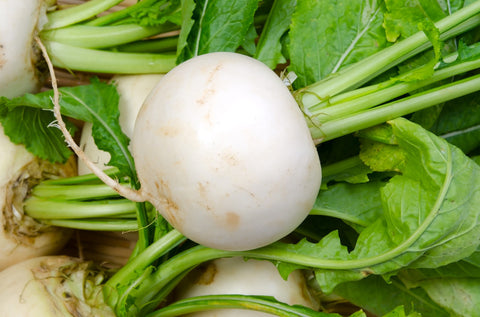 Turnip, White Doll F1