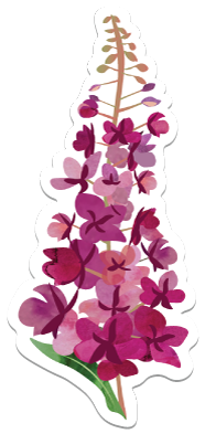 Fireweed - Vinyl Sticker
