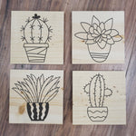 Succulents 4 Pack Take and Make Kit - Paisley Grace Designs