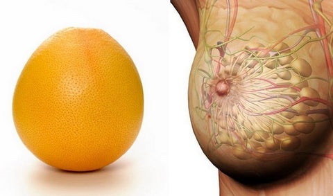 Grapefruits, Oranges and the mammary glands