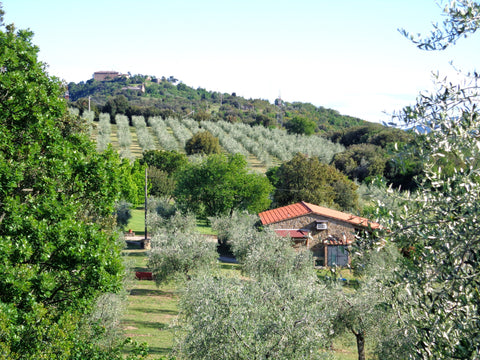 Italian (Umbria) - Extra Virgin Olive Oil