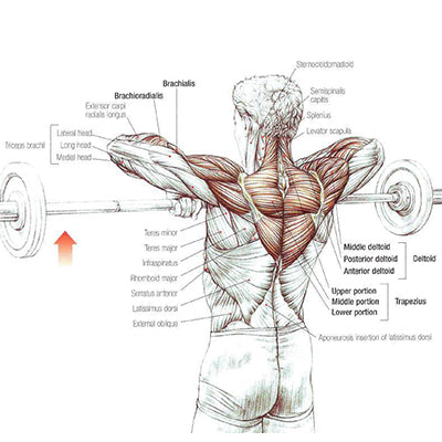 How to Upright Row