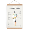 Human Body Poster by We Are Squared