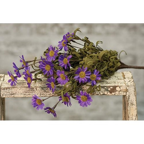 Mini Mountain Purple Daisy Bush Pick