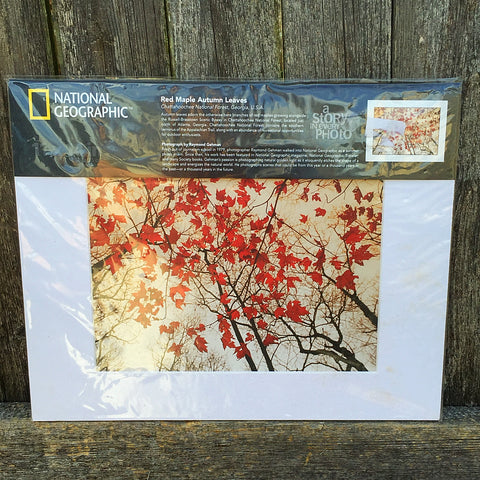 National Geographic Red Maple Autumn Leaves Print and Matte