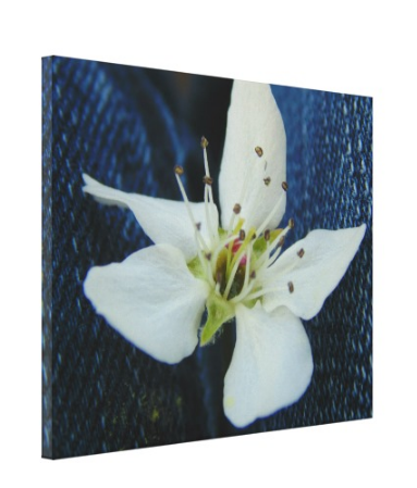 White Blossom Denim - Canvas Gallery Wall Art - 8 x 10, 16 x 20, 24 x 36
