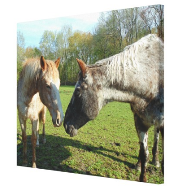 Horse Kisses - Canvas Gallery Wall Art - 8 x 10, 16 x 20, 24 x 36