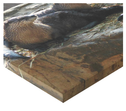 Otters - Canvas Gallery Wall Art - 8 x 10, 16 x 20, 24 x 36