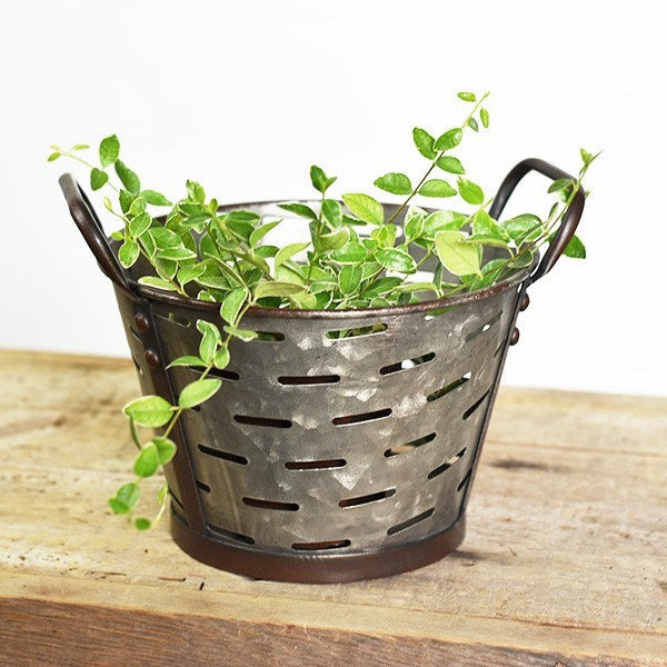 "Vented Olive Bucket Handled 10"" Tub"