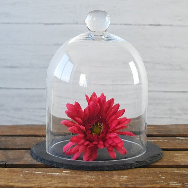 "Glass Display 8"" Bell Jar with Slate Base"