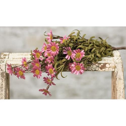 Mini Mountain Pink Daisy Bush Pick