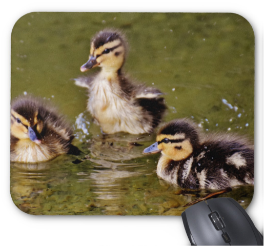 Baby Animals Mousepad - Swimming Ducklings - Mouse Pad