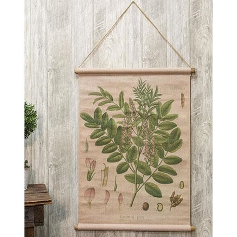 Licorice Plant Glycyrrhiza Botanical Canvas Hanging