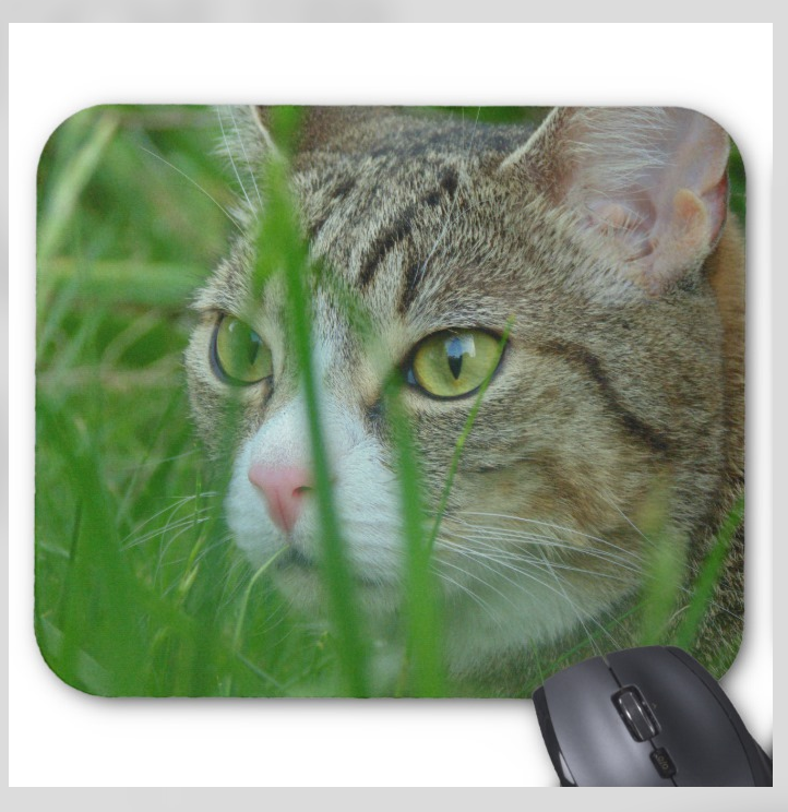 Daxter the Cat Mousepad - Hidden Kitten - Mouse Pad