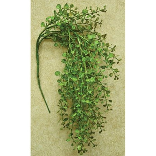 Light Green Peppergrass Hanging Bush, 19""